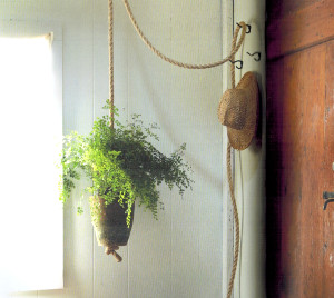 knotted-rope-plant-interior garden